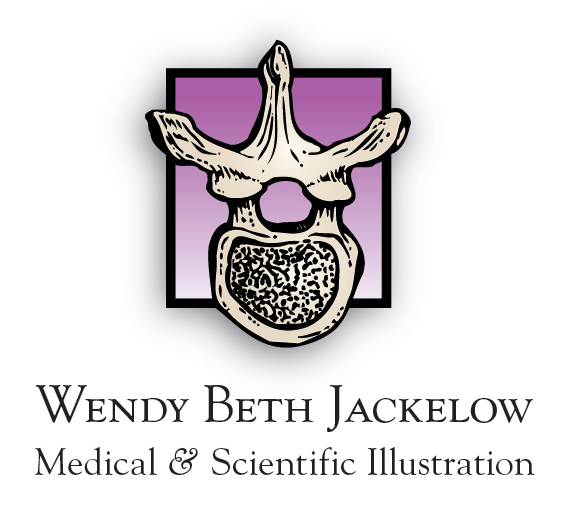 Wendy Beth Jackelow Medical & Scientific Illustration